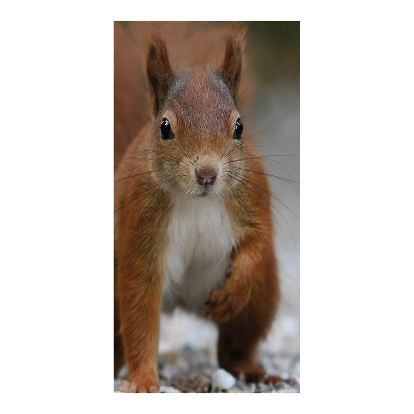 """# Motivdruck """"Eichhörnchen"""", 180x90cm Stoff"""