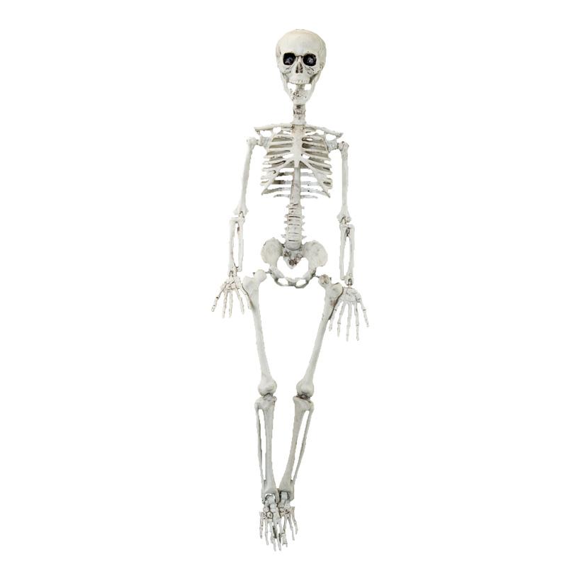 Skelett, 90cm zum Hängen, aus Kunststoff