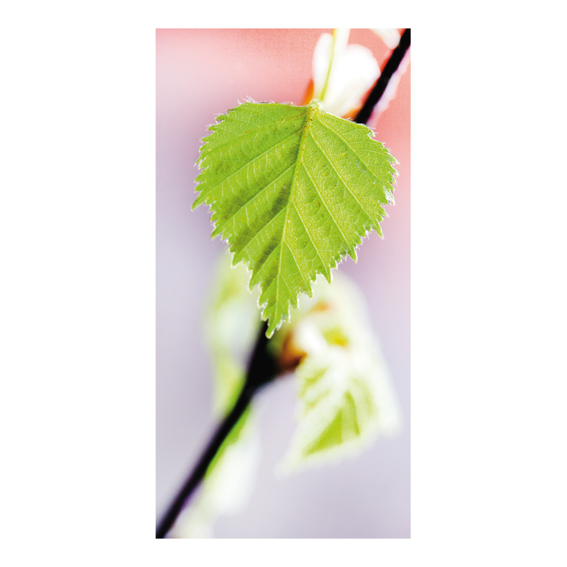 "# Motivdruck ""Blatt im Frühling"", 180x90cm Papier"