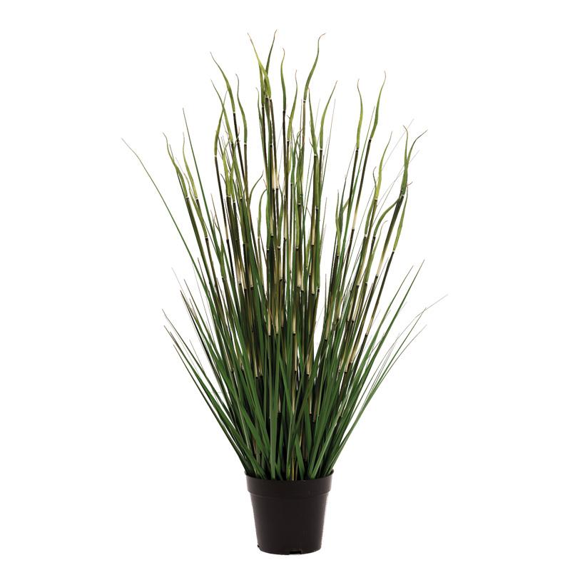 # Bambus-Zwiebelgras-Mix, 86cm im Topf