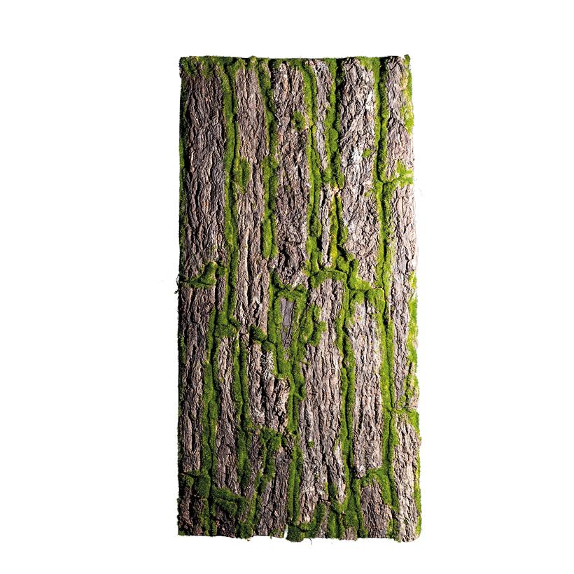Baumrindenplatte, 100x50cm bemoost, mit echter Baumrinde