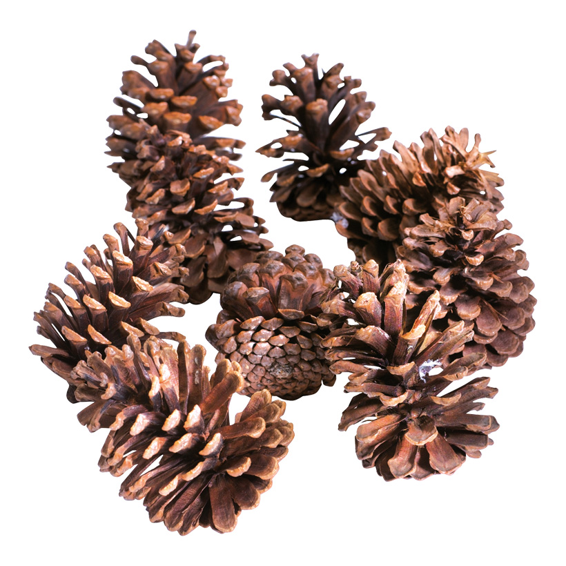 Kiefernzapfen Naturmaterial, ca. 25 Stk./Box