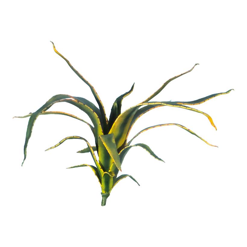 Aloepflanze, 50cm 16-fach