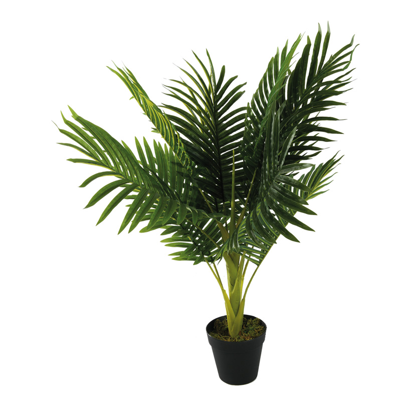 # Areca Palme, 70cm mit Kunststoff Topf